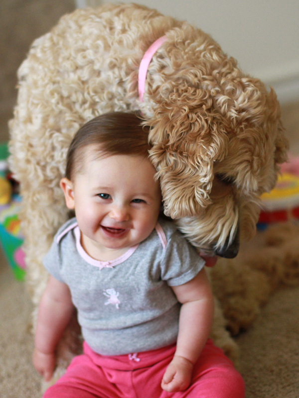 Goldendoodle dog and baby portrait