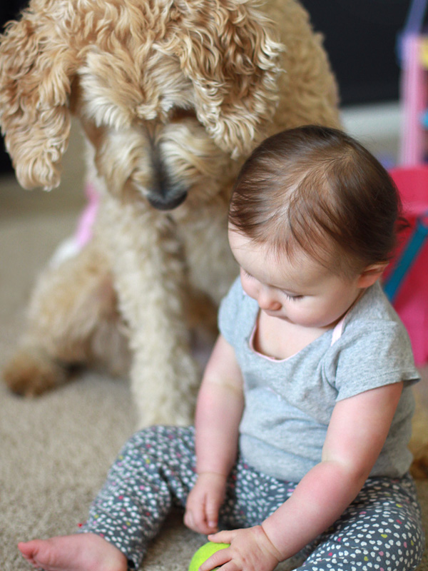 Goldendoodle and baby portrait