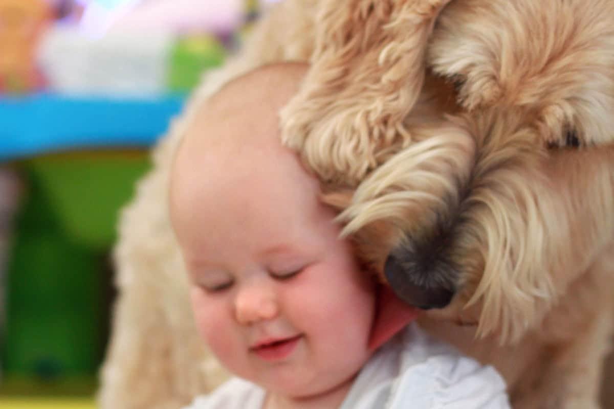 Puppy / Baby Love