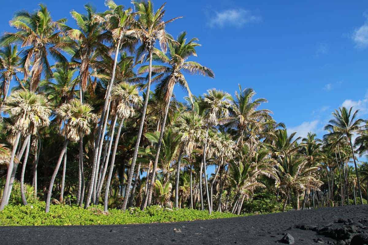 Palm Trees, Blue Sky, and Black Sand